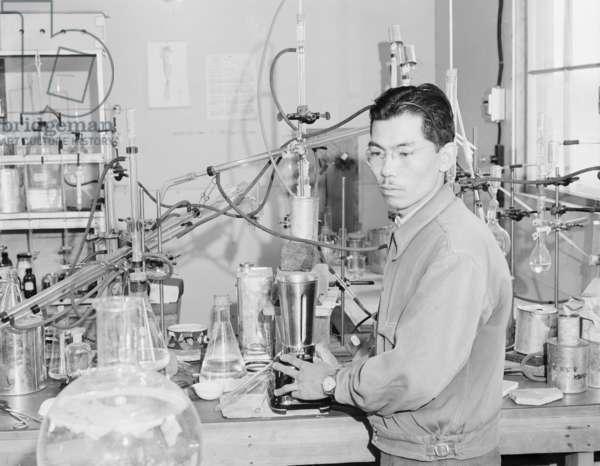 Frank Hirosama in laboratory at Manzanar, 1943 (b/w photo)