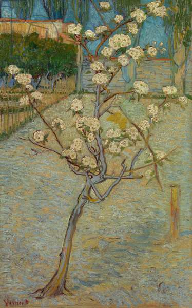 Small pear tree in blossom, 1888 (oil on canvas)