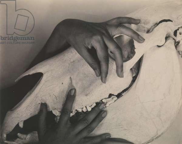 Georgia O'Keeffe—Hands and Horse Skull, 1931 (gelatin silver print)