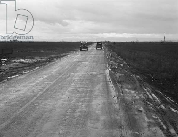 Road between potato fields, California, 1939 (b/w photo)