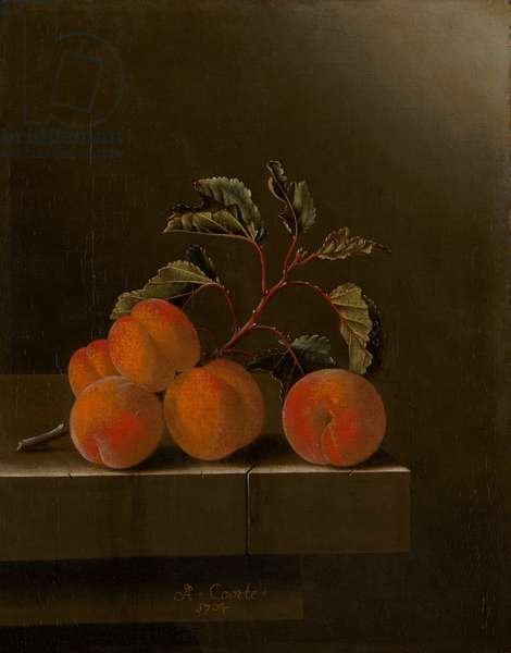 Still Life with Five Apricots, 1704 (oil on canvas)