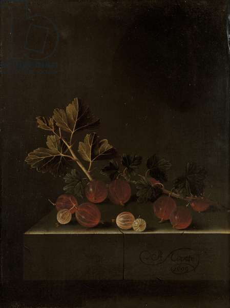 A Sprig of Gooseberries on a Stone Plinth, 1699 (oil on panel)