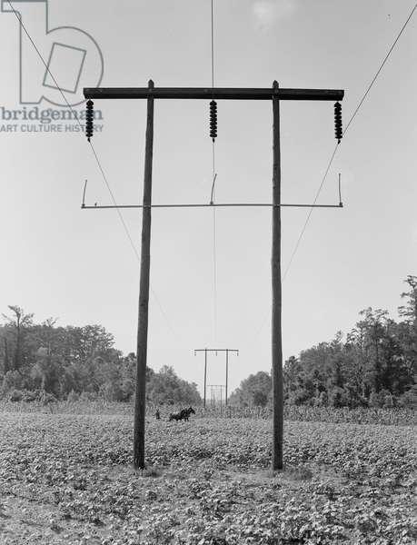 Rural electrification in Pulaski County, Arkansas, 1938 (b/w photo)