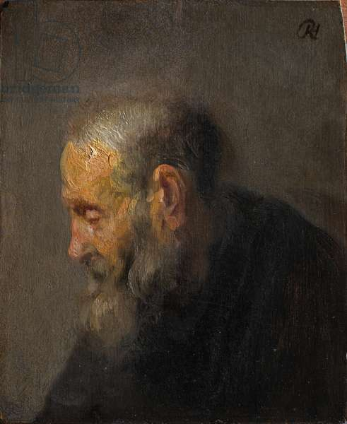 Study of an Old Man in Profile, c. 1630 (oil on panel)