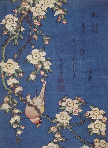 Bullfinch and weeping cherry-tree, pub. c.1834 (colour woodblock print)