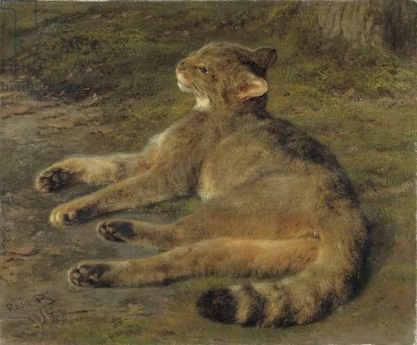 Wild Cat, 1850 (oil on canvas)
