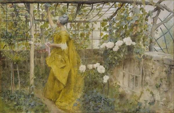 The Vine, 1884 (w/c on paper)