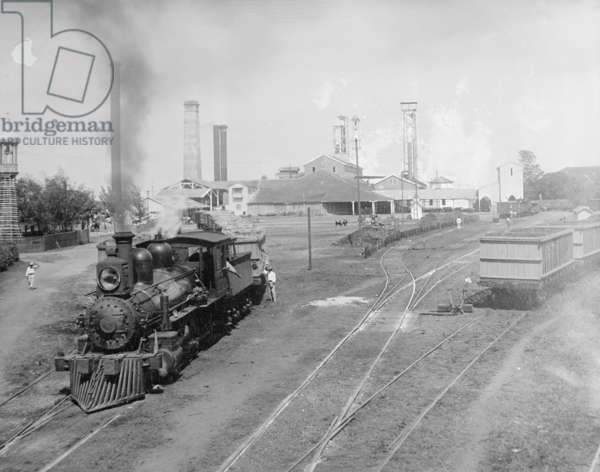 Central factory Cuba, c.1915 (b/w photo)