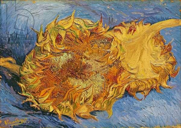 Sunflowers, 1887 (oil on canvas)