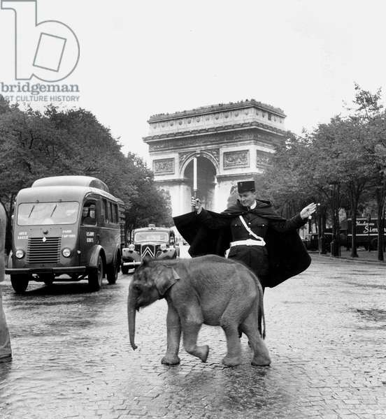 Baby Elephant in The Streets of Paris Near The Arch of Triumph September 13, 1966  (b/w photo)