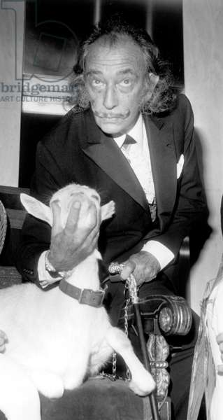 Salvador Dali With A Goat at Exhibition November 17, 1971 (b/w photo)