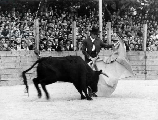For Birthday of Picasso (80 Years Old), Spanish Toreador Luis Miguel Dominguin in Arene With Bull October 30, 1961, France (b/w photo)