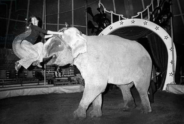 Jane Birkin Climbs Her Elephant's Trumpet Repeats Her Circus Number For The Union Des Artistes Gala May 12, 1975. Neg: Cx8088 (b/w photo)