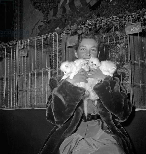 Cat show in Paris, November 1949 : French actress Odile Versois with white kittens (b/w photo)