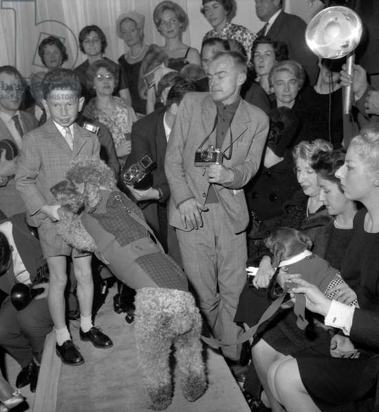 """Fashion for dogs, Paris, October 16, 1960 : here a dog called """"Athos"""" (poodle) with a ski suit (b/w photo)"""