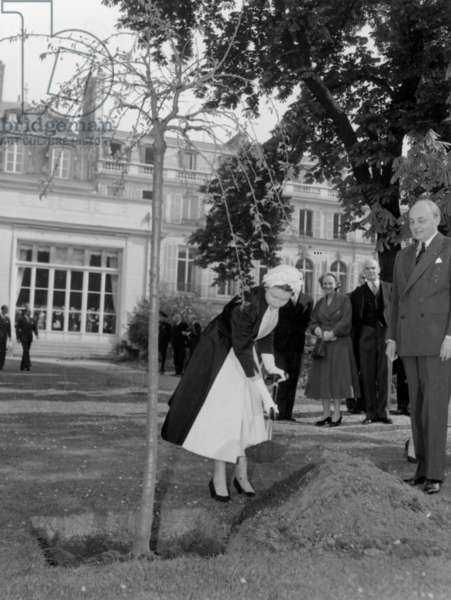 Queen Elizabeth Ii of England Planting A Tree Outside English Embassy in Paris on April 8, 1957 (b/w photo)