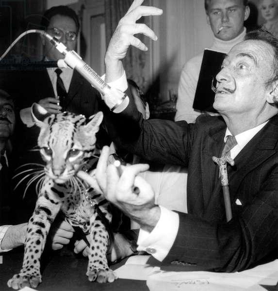 Salvador Dali With Ocelot during Radioprogram on Rtl May 6, 1967 (b/w photo)
