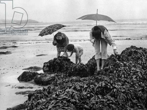Rainy Day in Pleyben, Brittany, France, July 15, 1974 : Holidaymakers Looking For Shellfishes on The Beach (b/w photo)