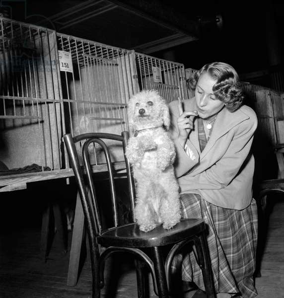 Dog show in Paris, October 21, 1949 (b/w photo)