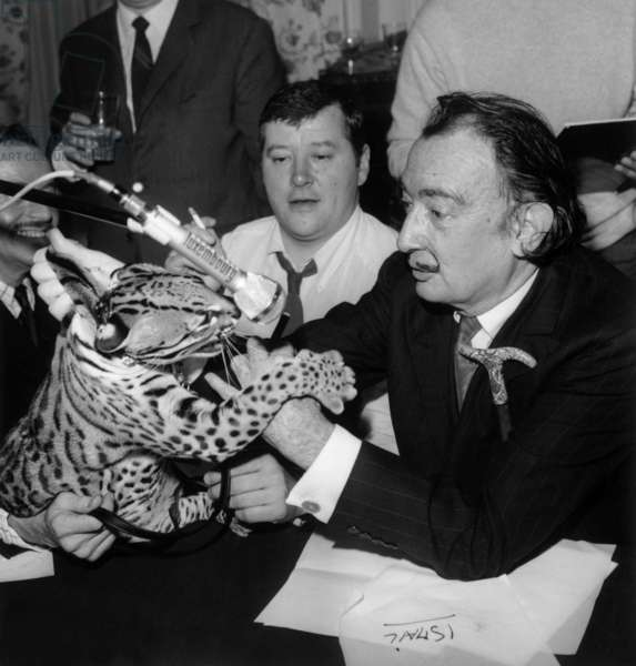 Salvador Dali With his Ocelot and Journalist Jean Pierre Farkas during Radioprogram on Rtl May 6, 1967 (b/w photo)