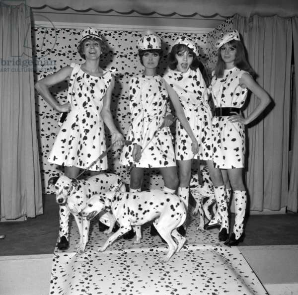 Dalmatian Fashion October 26, 1967: Models (With Dress, Boots, Panties, Hat, Cap And Beret In Dalmatian Pattern) With A Dalmatian Dog On Leash Neg: C73236 (b/w photo)