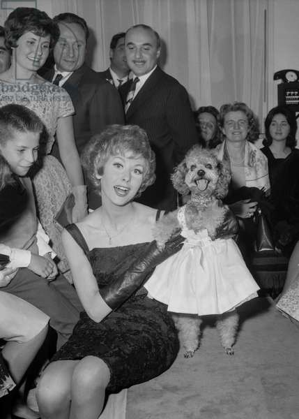 """Fashion for dogs, Paris, October 16, 1960 : here a dog called """"Billy"""" (poodle) with a dress and her mistress Cendrine (b/w photo)"""