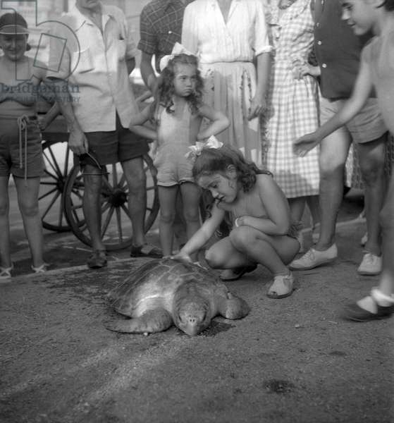 A giant turtle in Cannes, France, September 1949 (b/w photo)