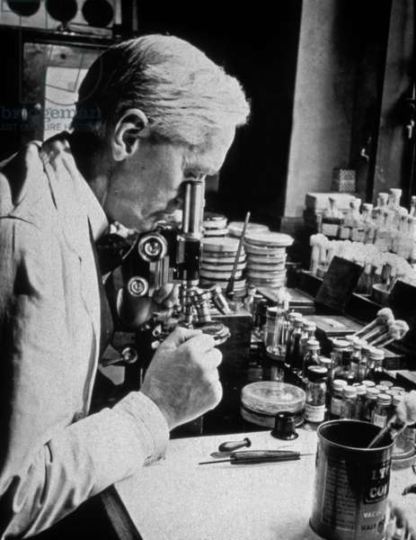 Alexander Fleming (1881-1955) English bacteriologist who discovered in 1928 penicillin (antibiotics), Nobel prize in1945, here in his laboratory, c. 1945