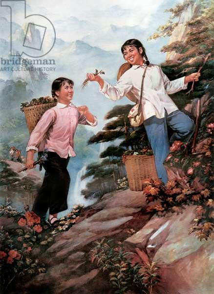 China : 2 young chinese women picking herbs (for culinary and medicinal reasons), porpaganda poster, 1973 (Great Proletarian Cultural Revolution)