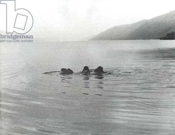 Imitation of The Loch Ness Monster By A Camel, 1968 (b/w photo)