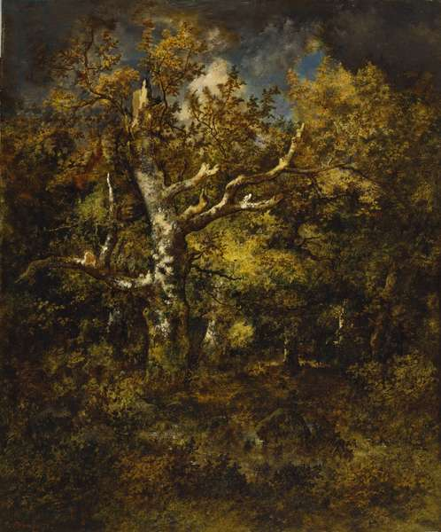 Forest of Fontainebleau, Autumn, 1871 (oil on mahogany)