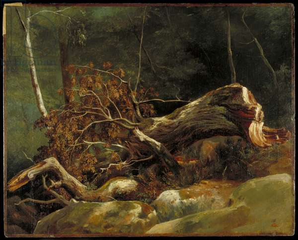 The Fallen Branch, Fontainebleau, c.1816 (oil on canvas on card)