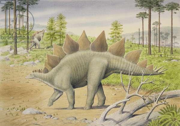 Stegosaurus (w/c on paper)