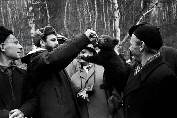 Fidel Castro Feeding A Bear Cub In Irkutsk Region
