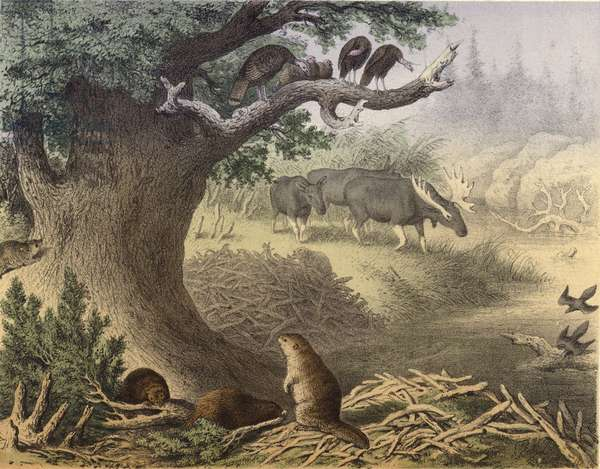 A scene in Northern Canada, the racoon, the beaver, wild turkeys, the elk, the passenger pigeon (chromolitho)
