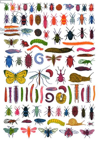 Garden Pests, 2007 (screen print)