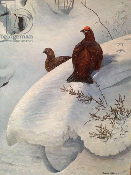 Grouse in Snow, c.1985 (oil on canvas)