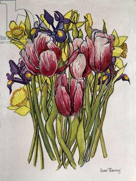 Tulips, Daffodils and Iris, (watercolour)