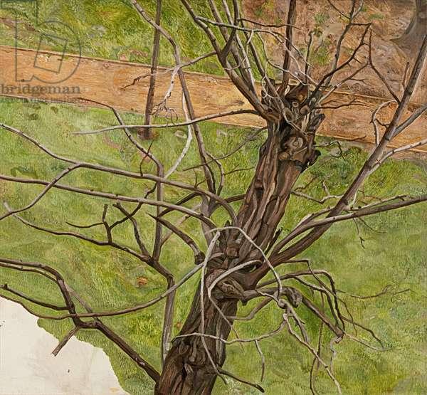 Acacia, 1975 (oil on canvas)