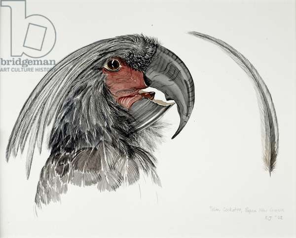 Palm Cockatoo, 2002, Watercolour and ink on paper