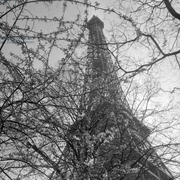 The Eiffel Tower through the Branches, Paris, 1952