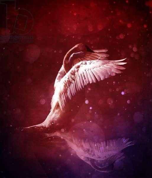 Bird Kingdom  7 (bloodline)
