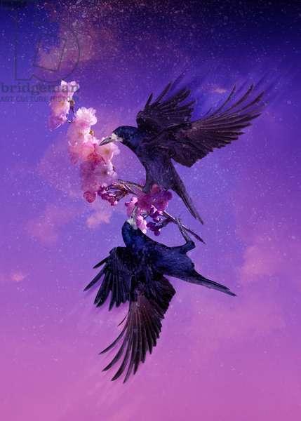 Bird Kingdom 5, 2018 (digital photo art)