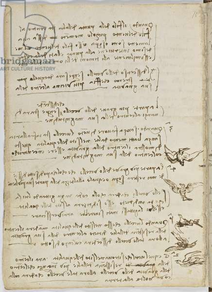 Birds Flight Code, c. 1505-06, paper manuscript, cc. 18, sheet 7 verso