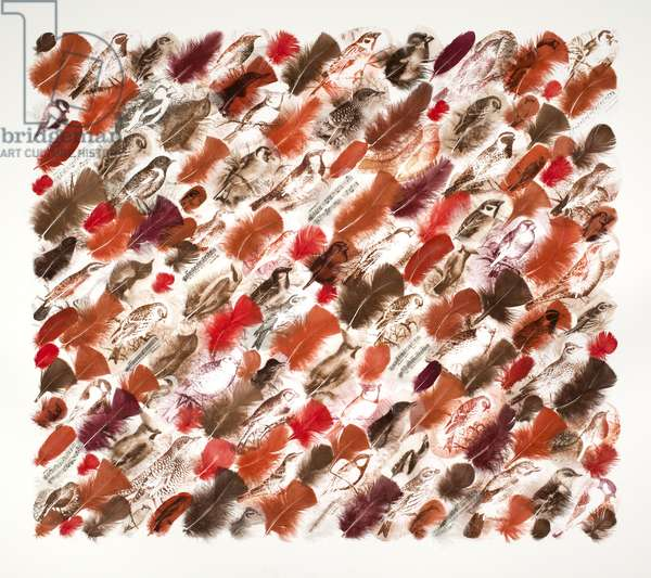 Dawn Chorus, red, 2015 (printed and collaged feathers)