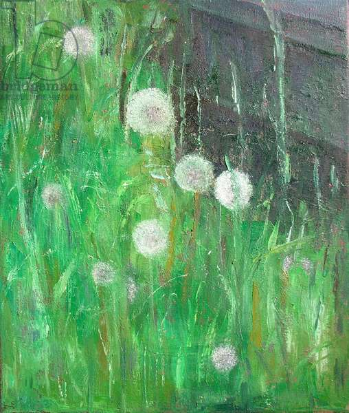 Dandelion Clocks in Grass