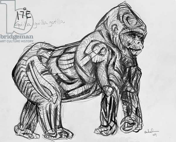 17E Western Lowland Gorilla, 2009, (graphite on paper)