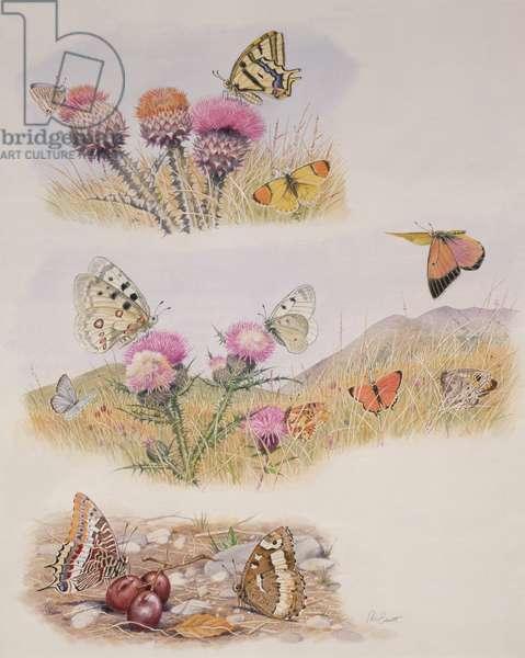 Butterflies (w/c on paper)