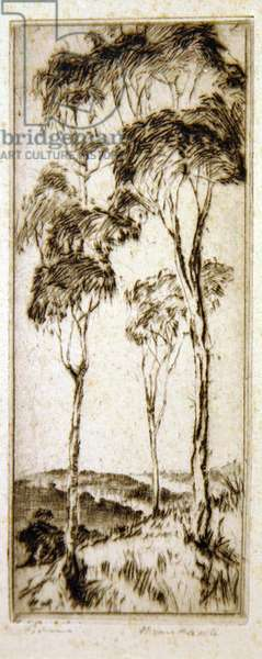 Gum trees (etching)