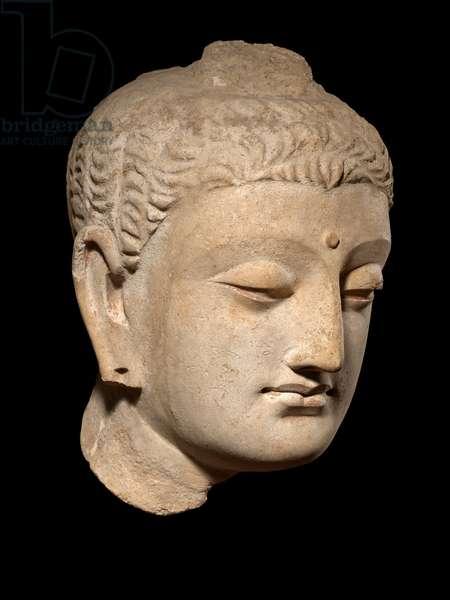 Buddha Head, Ghandhara (stucco)